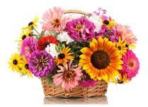 Jeni gati për të zgjedhur dhuratën më të mirë për Ditën Ndërkombëtare të Gruas
